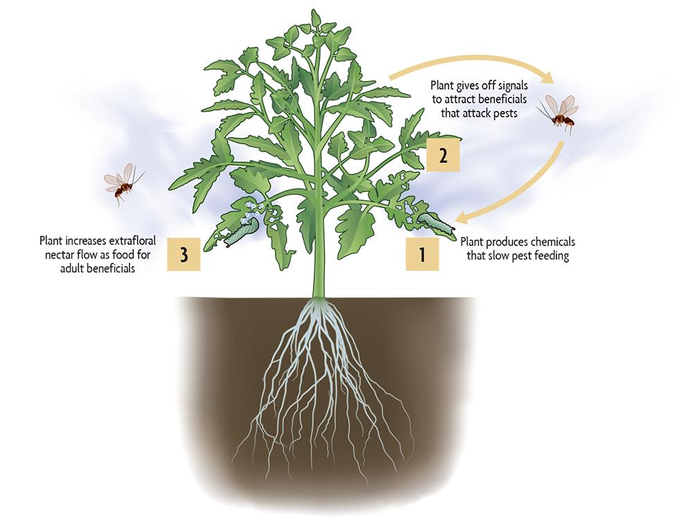 plant defense strategies