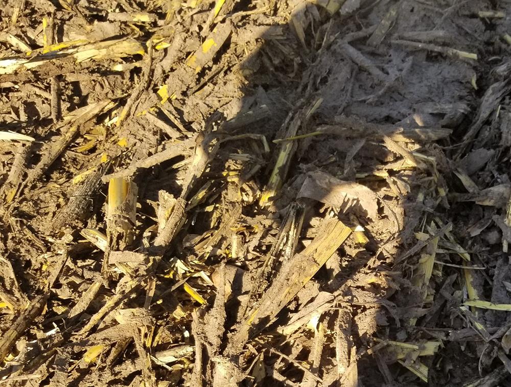 slurry application after harvest