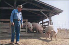 Marion Storm, a Bosworth, Mo., hog producer and member of the Patchwork Family Farms Cooperative, moves his 100 sows and piglets through a series of barns with access to pasture. By managing his hogs on pasture, Storm alleviates manure concerns.