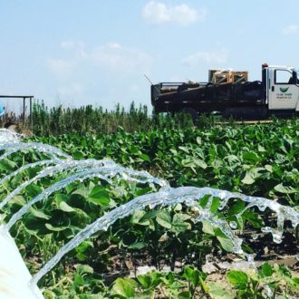 irrigating soybeans