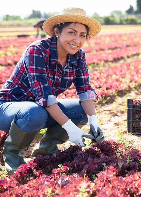 woman kneeling in lettuce field