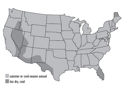 United States map of buckwheat growth