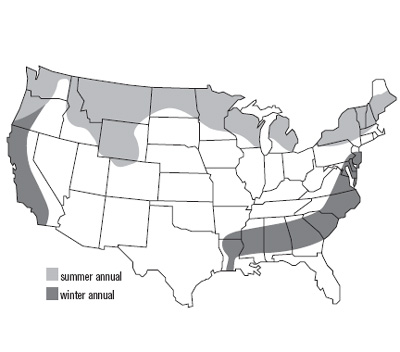 United States Map of Field Pea Growth