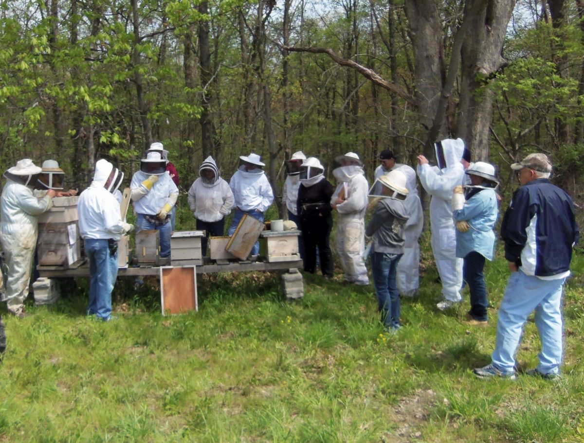 Beekeepers at an outdoor workshop