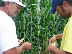 Ron (left) and David Rosmann use long rotations and minimum tillage to grow healthy crops, resulting in minimal pest problems.