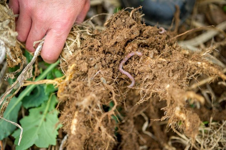 a worm in plant roots