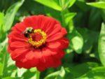 sp17flower.jpg
