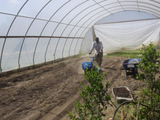 tilling the soil in a high tunnel