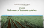 What is Sustainable Agriculture Animation Episode 8